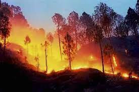 उत्तराखंड के जंगलो की आग बेकाबू , मुख़्यमंत्री श्री तीरथ सिंह रावत ने आपात बैठक बुलाई !